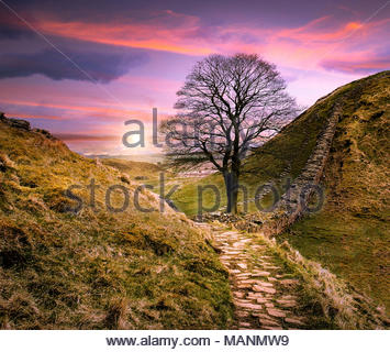 Sycamore Gap, Hadrian's Wall, Northumberland, United Kingdom. - Stock Photo