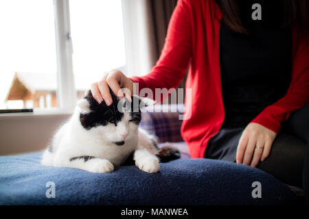 A grumpy cat being stroked on the sofa - Stock Photo