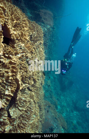 Beautiful soft corals  in the Ceram sea, Misool, West Papua, Indonesia - Stock Photo