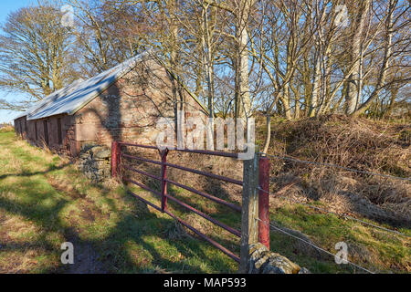 An old Single Storey Farm Building beside the Road, with a red metal Iron gate beside it leading to a small Pasture in Light Woodland in Angus, Scotla - Stock Photo