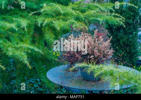 Photo of  old marble table and pot,taken in garden- - Stock Photo