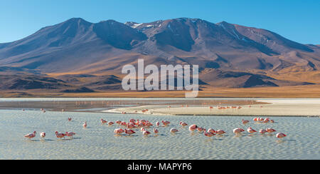 Landscape of the Andes mountain range at the Canapa Lagoon with James and Chilean flamingos in the foreground, Altiplano of Bolivia, South America. - Stock Photo