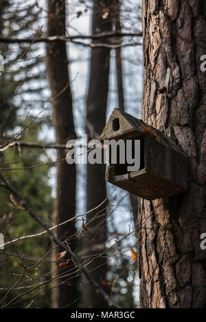 Little bird table on a big old tree - Stock Photo