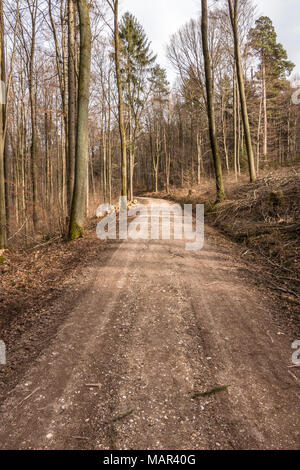 Woodland path in the middle of the forest - Stock Photo