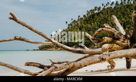 Dry root on Haad Salad Beach on Koh Phangan Island in Gulf of Thailand, Thailand - Stock Photo