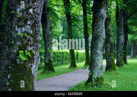 Tree lined pathway at German Castle - Stock Photo