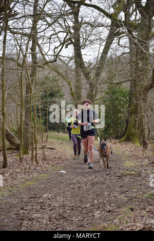 10k canicross race, Fritton Lake, Norfolk UK March 2018. Part of Angles Way, 93 mile long distance footpath from Great Yarmouth to Thetford - Stock Photo
