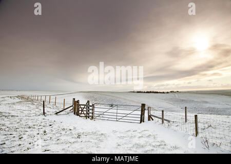 A covering of snow on Milk Hill, part of the Pewsey Downs in Wiltshire. - Stock Photo
