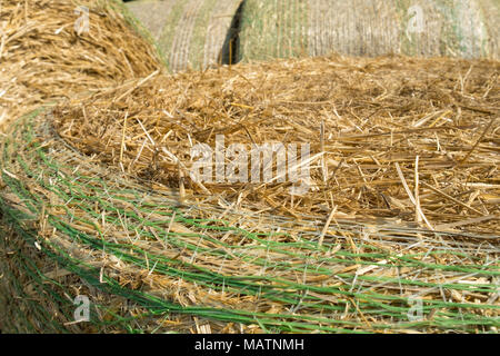 Bales of wheat straw mechanically packed in a green plastic mesh after harvesting. Rural landscape on summer sunny day. Agriculture concept. - Stock Photo