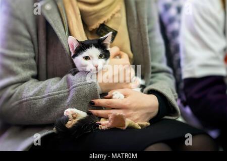 Frightened black and white kitten in hands of girl volunteer, in shelter for homeless animals. Girl takes cat to her home. - Stock Photo