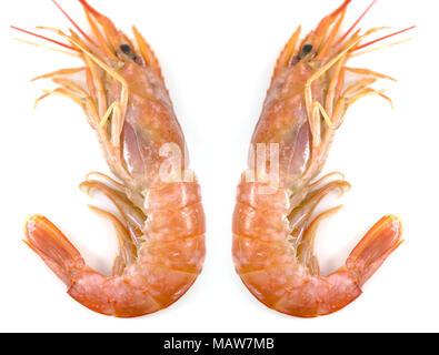Fresh prawn or fresh shrimp, red shrimps isolated on white background, Food background. - Stock Photo
