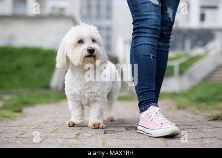 Girl walking with white fluffy dog - Stock Photo
