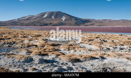 The Red Lake, or Laguna Colorada, on the Altiplano near Uyuni inside Eduardo Avaroa National Reserve in Bolivia at 4300 m above sea level. - Stock Photo