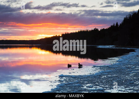 Loch Morlich at sunset in winter, Cairngorms National Park, Badenoch and Strathspey, Highland, Scotland, UK