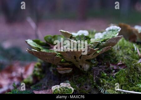 Fungus in a forest near a dutch town. - Stock Photo
