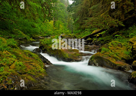 WA15021-00...WASHINGTON - Moss covered rocks along the banks of the North Fork Sol Duc River in Olympic National Park. - Stock Photo