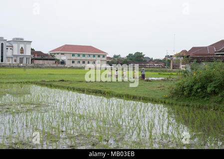 A view towards a rice field in Central Java. - Stock Photo