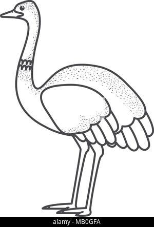 wild ostrich australian bird - Stock Photo