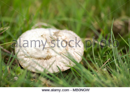 Fungus in the grass on a summer day - Stock Photo