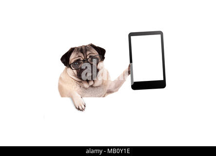 pug puppy dog with glasses holding up blank tablet or mobile phone, hanging on white banner, isolated - Stock Photo