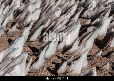 Ice formations in the Siloli desert of Bolivia near the Uyuni salt flat, South America. - Stock Photo