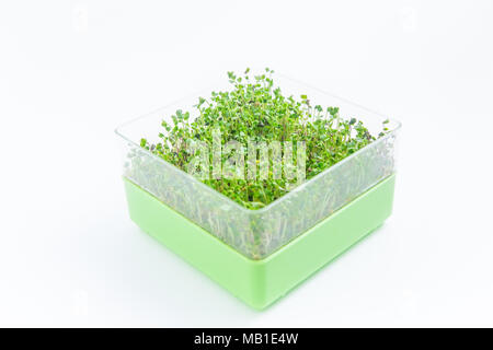 Bright green crop of microgreen sprouts on a white background - Stock Photo