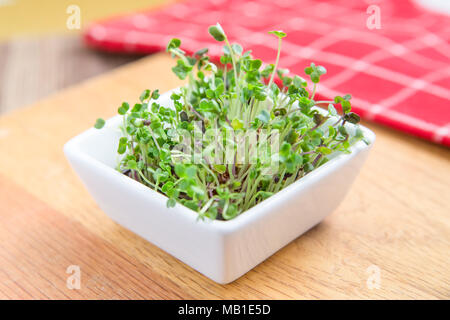 Dish of fresh microgreen sprouts on a wooden kitchen counter with a red napkin in background Stock Photo