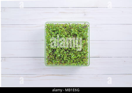Tray of fresh microgreen sprouts on a white wood background - Stock Photo