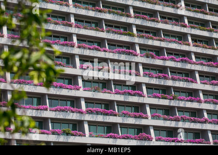 View of pink bougainvilleas on Marina Bay Sands balcony - Stock Photo