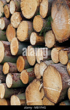 Stack of cut Norway spruce (Picea abies) logs, firewood used as wood fuel - Stock Photo