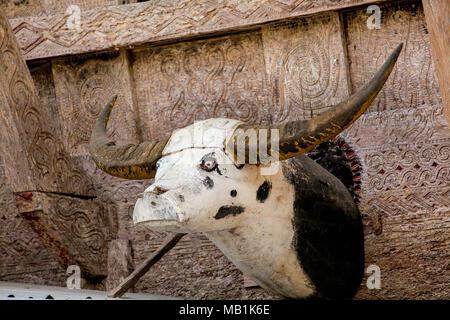 Tana Toraja - a wooden buffalo head is often placed on the Tongkonan houses and rice barns. South Sulawesi, Indonesia. - Stock Photo