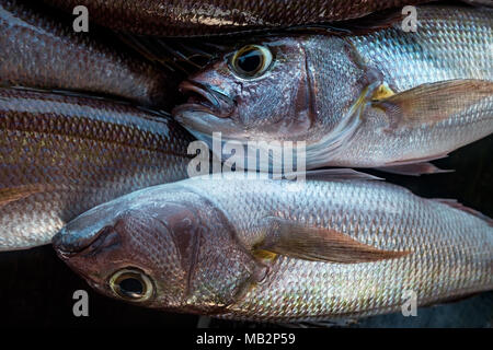 Fresh white snapper fish detail - Stock Photo