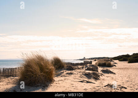 Beach scene with beach dunes and copy space. Es Cavallet, Ibiza Island. Sunset scene. - Stock Photo