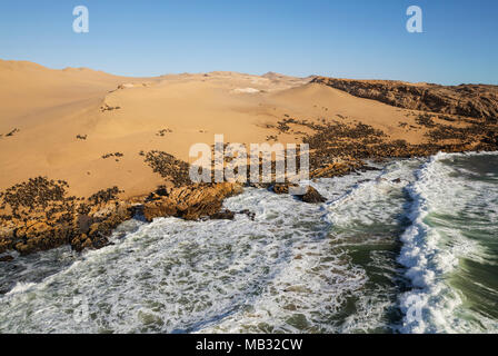 Cape Fur Seal (Arctocephalus pusillus) colony at the coast of the Namib Desert, aerial view, Namib-Naukluft National Park - Stock Photo