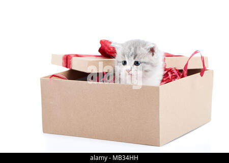 Little grey fluffy cute kitten sitting inside cardboard box with red birthday box on top being present for special occasion. Small adorable charming playful cat valentine day curious happiness - Stock Photo