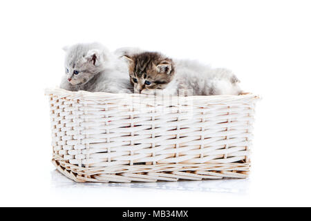 Small brown striped fluffy blue-eyed kitten sitting among other cute grey kitties in white wicker basket while posing for photoset. Little newborn gray charming adorable kitties cuteness happiness - Stock Photo