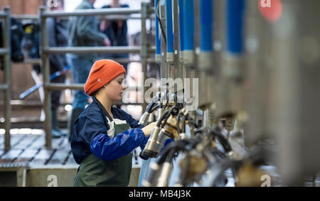 Germany, Echem. 7th April 2018.  Participant Lea Krispin testing milking equipment during the Lower Saxon milking championship. Twelve young men and women of between 16 and 25 years of age are competing to find out who is the best milker. The top three will then go on to the national competition. Photo: Philipp Schulze/dpa Credit: dpa picture alliance/Alamy Live News - Stock Photo