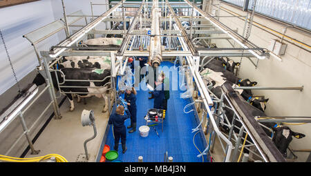 Germany, Echem. 7th April 2018.  Participants and judges standing in a milking stall during the Lower Saxon milking championship. Twelve young men and women of between 16 and 25 years of age are competing to find out who is the best milker. The top three will then go on to the national competition. Photo: Philipp Schulze/dpa Credit: dpa picture alliance/Alamy Live News - Stock Photo