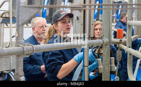 Germany, Echem. 7th April 2018.  Participant Janika Waller (C) testing milking equipment during the Lower Saxon milking championship. Twelve young men and women of between 16 and 25 years of age are competing to find out who is the best milker. The top three will then go on to the national competition. Photo: Philipp Schulze/dpa Credit: dpa picture alliance/Alamy Live News - Stock Photo