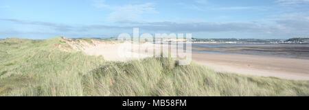 Sand dunes in summer, Crow Point Devon UK - Stock Photo
