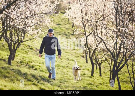 Morning in spring nature. Man with his dog (labrador retriever) walking between blooming trees. - Stock Photo