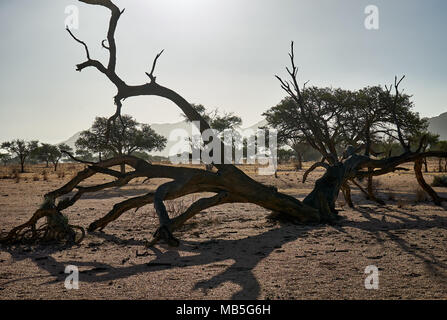 dead tree in tranquil landscape on Farm Namtib, Tiras mountains, Namibia, Africa - Stock Photo