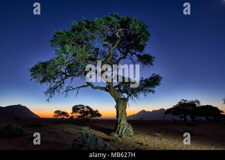 night shot of a tree with moonlight under sky with stars in tranquil landscape on Farm Namtib, Tiras mountains, Namibia, Africa - Stock Photo