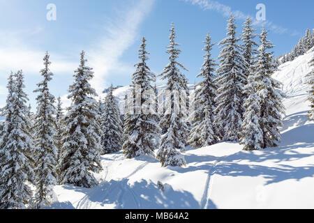 Beautiful Snow Covered Trees in an Alpine Ski Resort - Stock Photo
