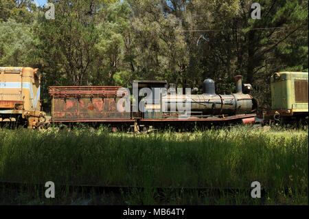 State Saw Mills steam engine SSM No. 2, with tender, slowly rusting away in a rail museum in Pemberton, Western Australia. - Stock Photo