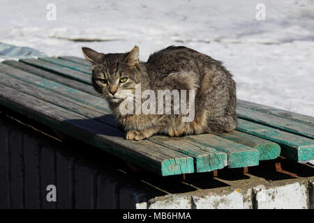 A cat with a gray cane color sits on a green bench, basking in the spring sun - Stock Photo
