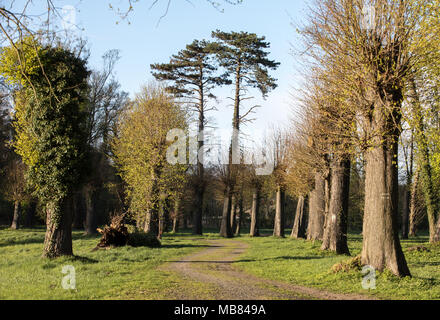 Romantic and mysterious alley path with old big trees in park. Beauty nature landscape. Summer walk. - Stock Photo