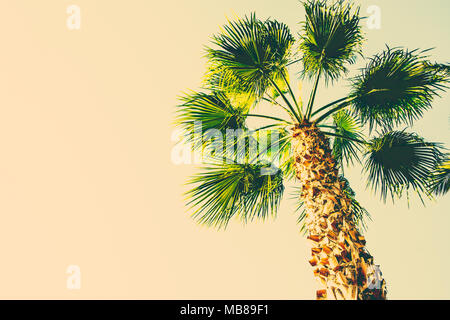 Palm Tree on Toned Beige Sky Background Trendy Color. Surrealistic Vintage Style Copy Space for Text. Tropical Foliage. Seaside Ocean Beach Vacation.  - Stock Photo