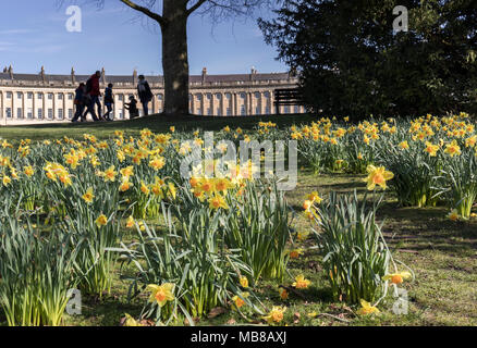 Spring Daffodils in Royal Victoria Park, Bath, with the Royal Crescent and family in the background - Stock Photo