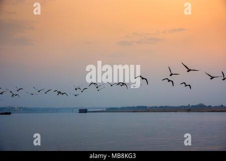 A flock of birds flies over the Ganges River at sunset at Varanesi, Uttar Pradesh, India - Stock Photo